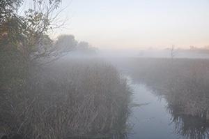 Joliet-Fog-029